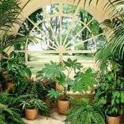 Удобрения для комнатных растений: орхидей, фиалок и других