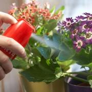 Средства защиты комнатных растений