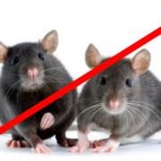 Средства от крыс, мышей, кротов (Родентициды)