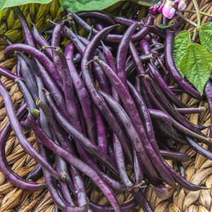 Фасоль Фиолетовый полюс
