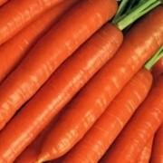 Морковь Берликум