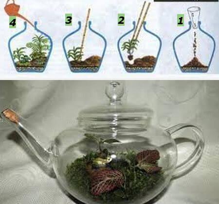 сад в стеклянном чайнике