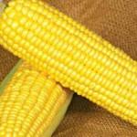 кукуруза насолода