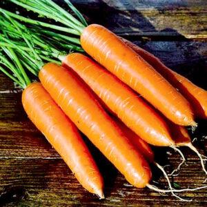 Морковь Памелла