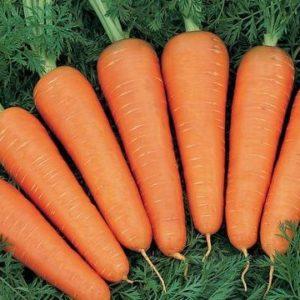 Морковь Рэд Коред