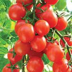томат карамель красная