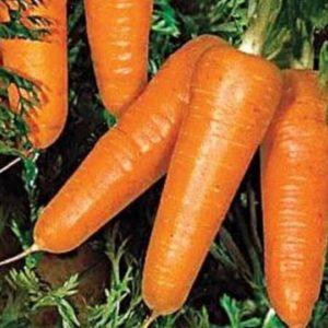 Морковь Редко