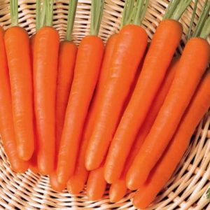 Морковь Лонг роте Штумп