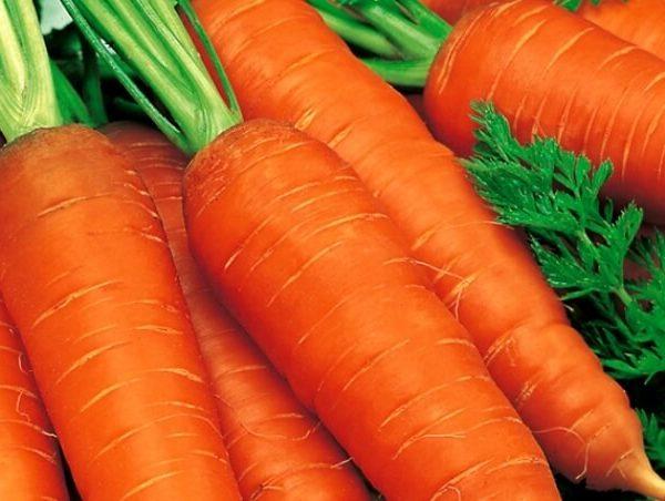 Морковь Лосиноостровская