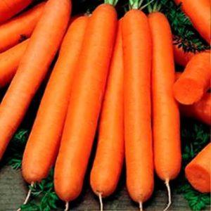 Морковь Тип-топ