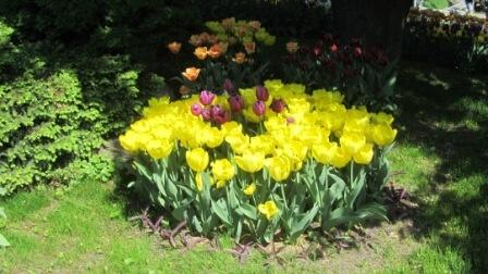 Фото с огорода. Моя дача