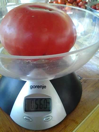 сладкий томат