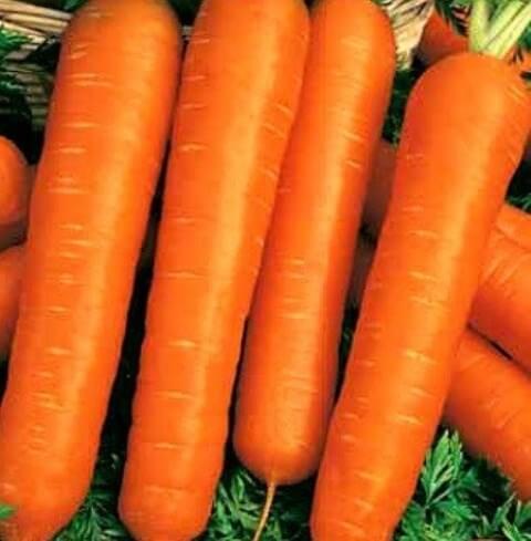 Морковь Ортолана