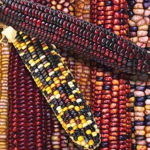 Кукуруза Индейский орнамент