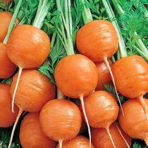 Морковь Парижский Рынок