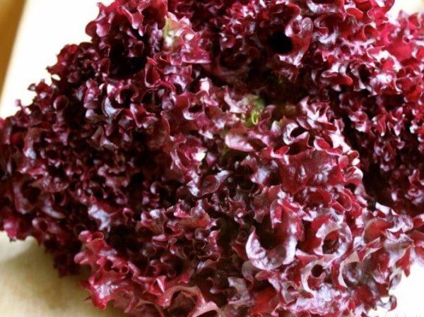 Салат красный Роселла