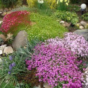 Цветочная смесь Альпийская горка