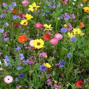 Цветочная смесь Дачная лужайка