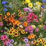Цветочная смесь Цветущий ковер