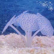 Кораллы для аквариума синий
