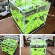 Семена для аквариума