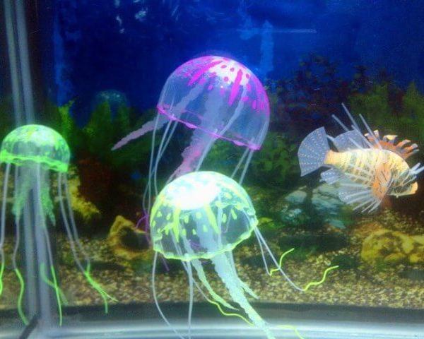 медузы для аквариума