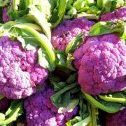 Капуста цветная Фиолетовая Сицилия
