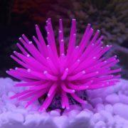 Коралл искуственный