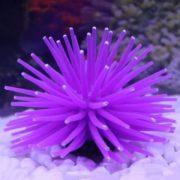 Коралл в аквариум купить