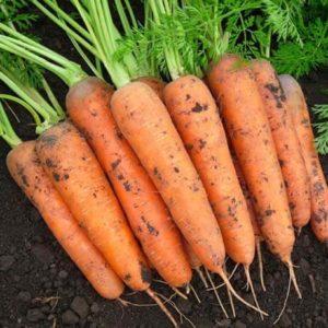 Морковь Бамбино каротель