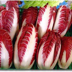 Салатный цикорий Красный ковчег Вероны