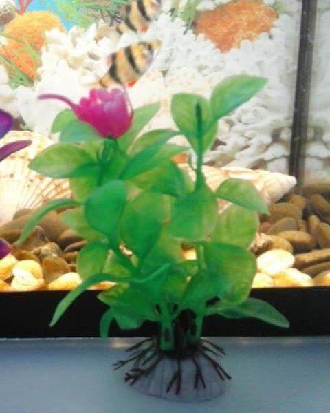 Искусственное растение для аквариума Бакопа каролинская