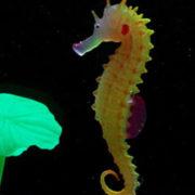 Искусственный морской конек в аквариум
