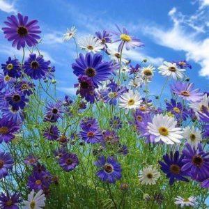 смесь синих цветов