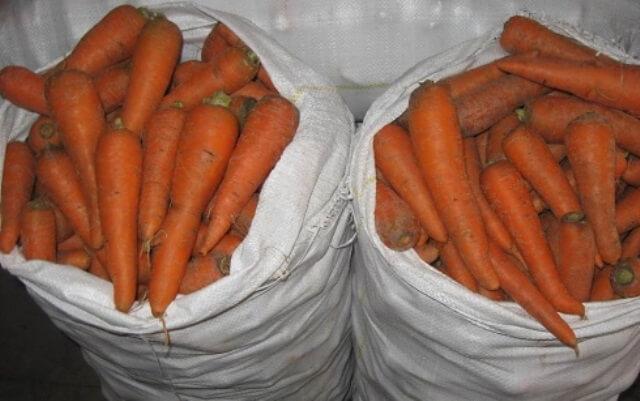 Как правильно заложить морковь на хранение