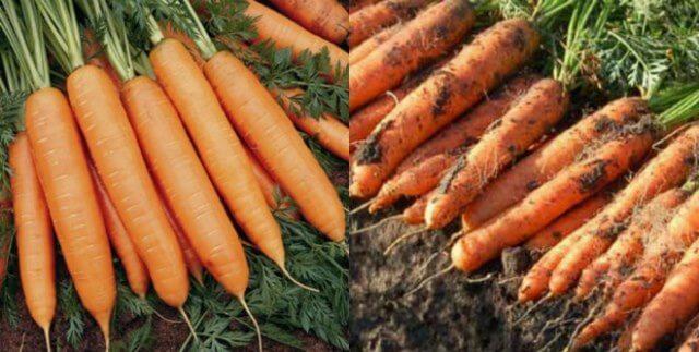 мыть морковь перед хранением