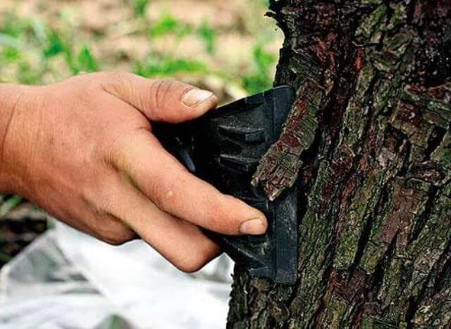 зачищаем старую кору дерева