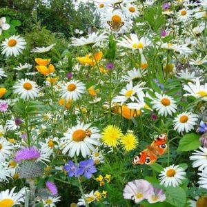 Цветочная смесь Лето в белом