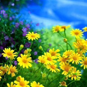 Цветочная смесь Лето в желтом