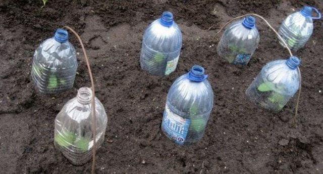 огурцы в бутылках-выращивание