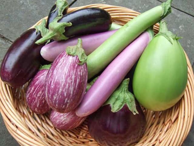 Как собрать семена баклажана