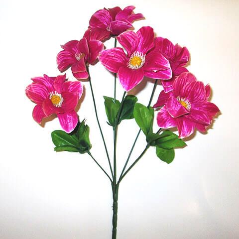 Георгина пурпурная