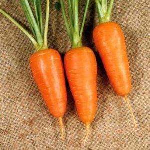 Морковь Манго