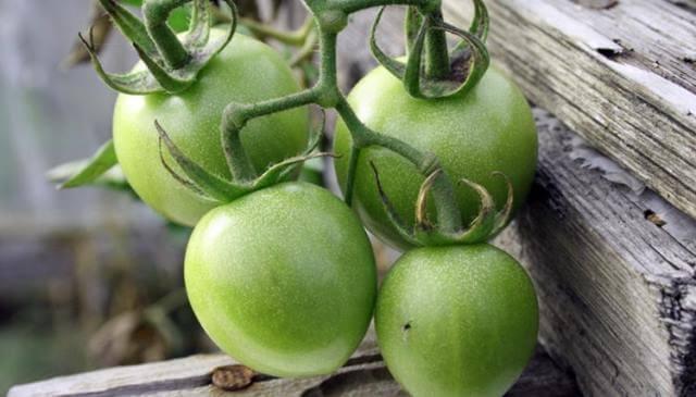 Как сохранить зеленые помидоры