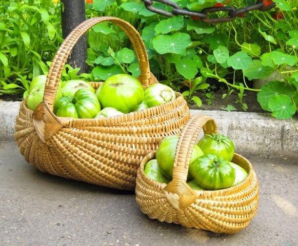 Зеленые томатные рецепты