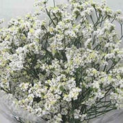 Кермек (Статице) Белый