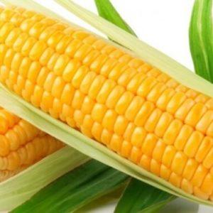 Кукуруза Желтый Амарилло