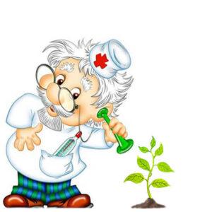 Здоровье растений