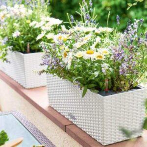 Смесь балконных растений