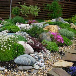 Смесь растений для альпийских горок